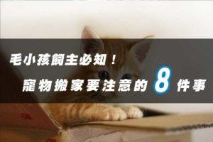 帶寵物搬家要注意的8件事情,安撫情緒很重要!